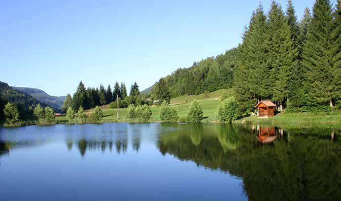 Au coeur des Vosges Tilleul